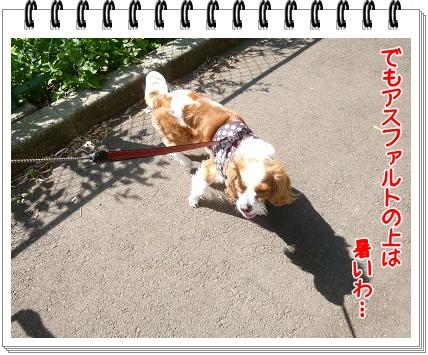 2012052010.jpg