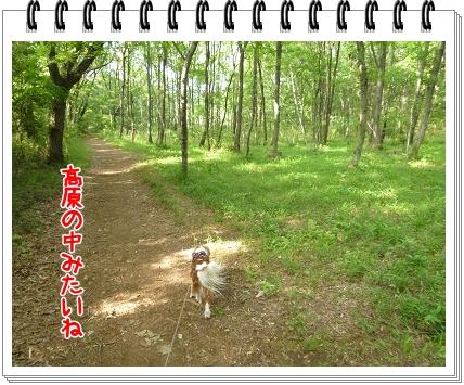 2012052012.jpg