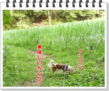 2012052015.jpg