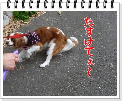 2012052703.jpg