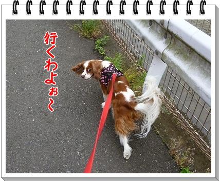 2012062401.jpg