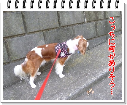 2012072902.jpg
