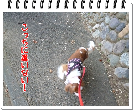 2012072905.jpg