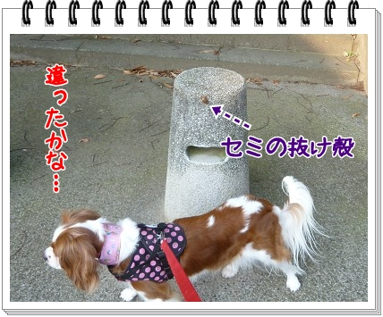 2012072906.jpg
