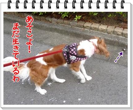 2012081103.jpg
