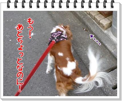 2012081105.jpg