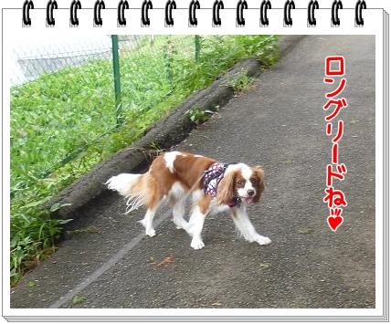 2012081501.jpg
