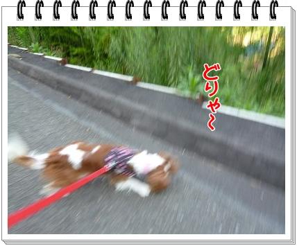 2012081803.jpg
