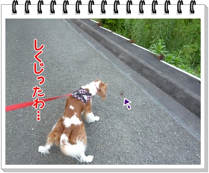 2012081804.jpg