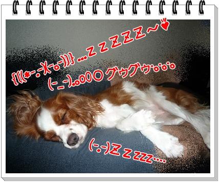 2012082601.jpg