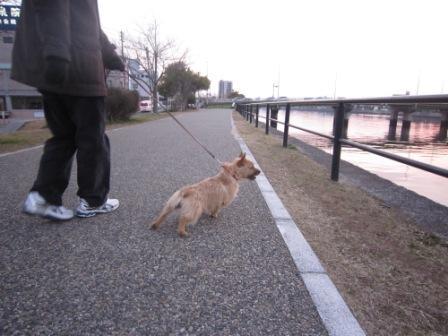土手ひっぱりIMG_3120