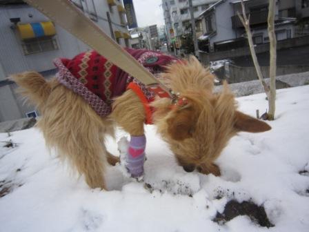 初積雪IMG_3202