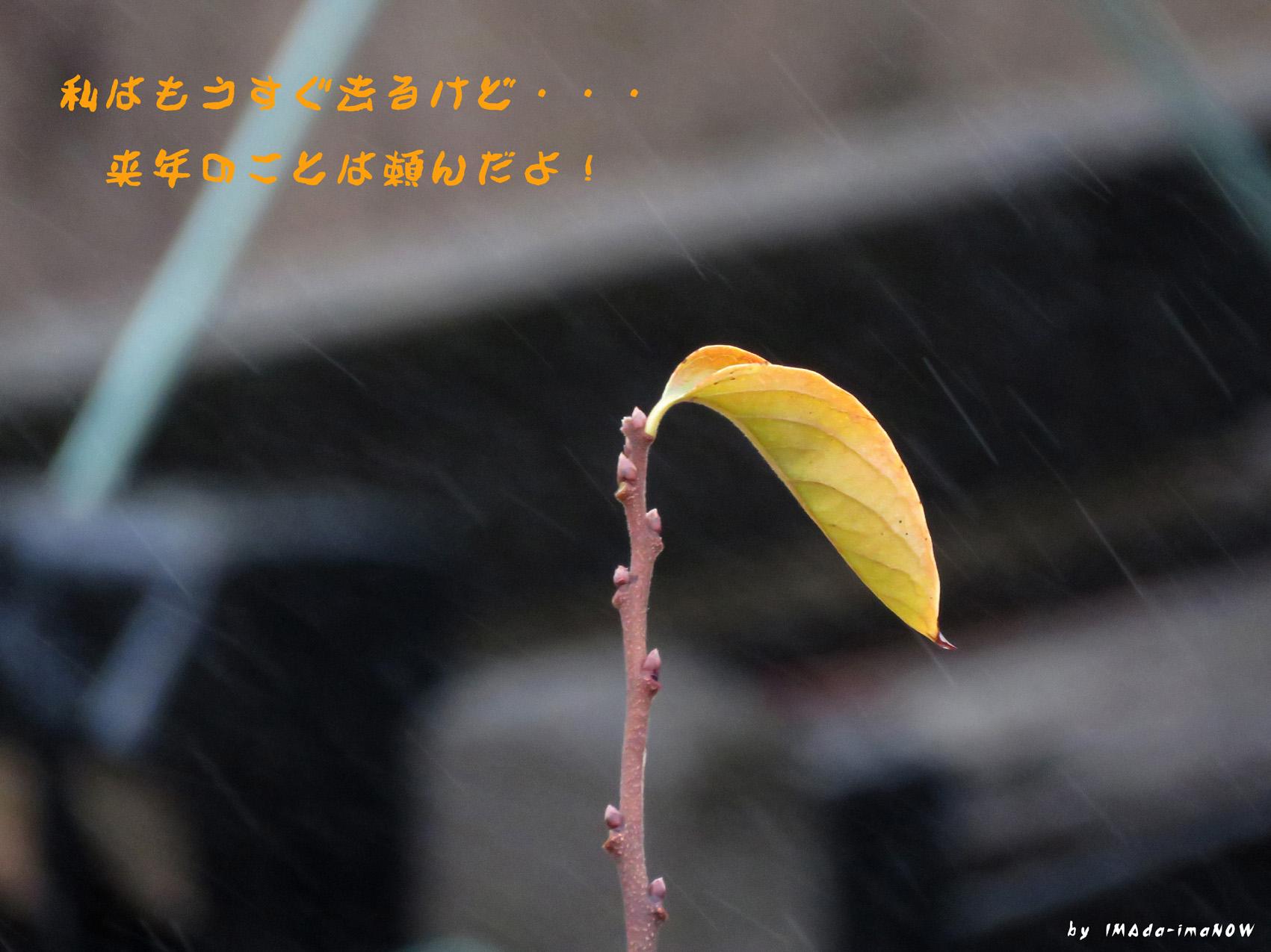 IMG_6400a.jpg