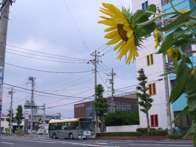 PIC_7408.jpg