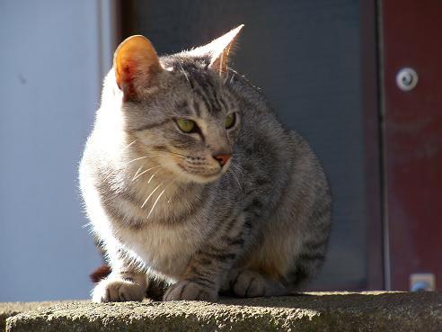 通りすがりに見かけた猫(694)