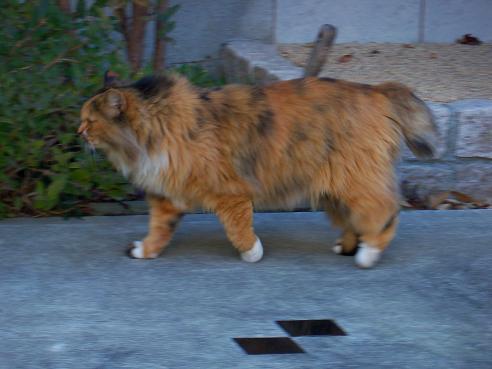 通りすがりに見かけた猫(695)