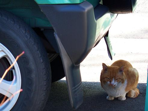 通りすがりに見かけた猫(697)