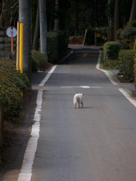 通りすがりに見かけた猫(700)