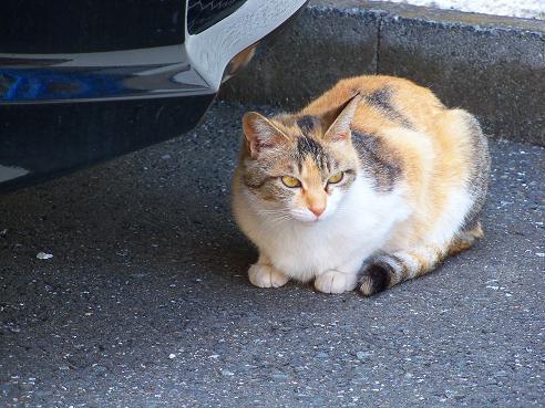 通りすがりに見かけた猫(703)