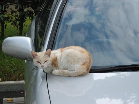 通りすがりに見かけた猫(713)A1100