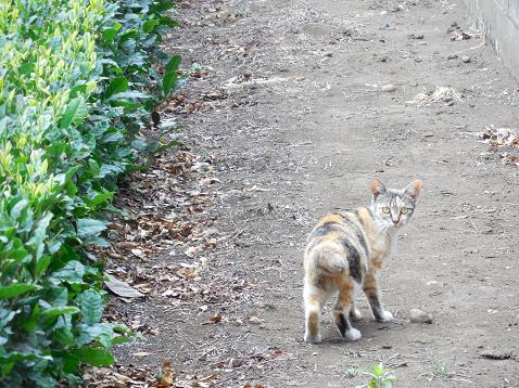 通りすがりに見かけた猫(731)