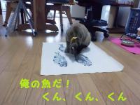 20120722_2_7.jpg
