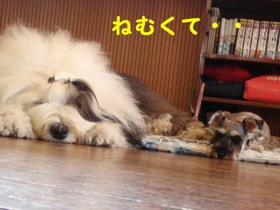 12092801_convert_20120928123948.jpg