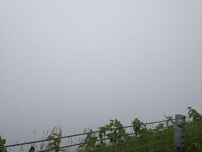 霧で海も見えません