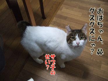 2012_02220015sのコピー