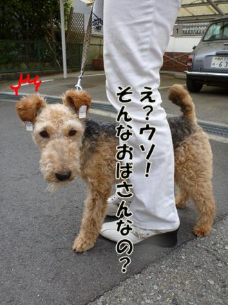2012_04210005.jpg
