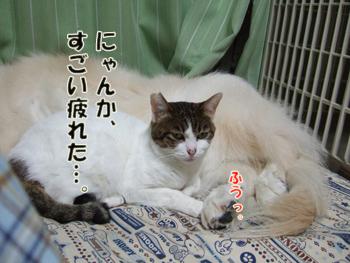 2012_04220049.jpg
