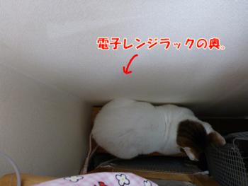 2012_04280014.jpg