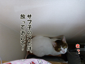 2012_04280015.jpg