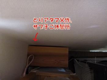 2012_05020017.jpg