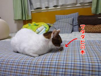 2012_05030001.jpg