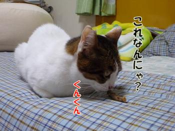 2012_05030007.jpg