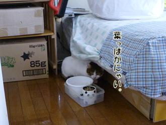 2012_05090024.jpg