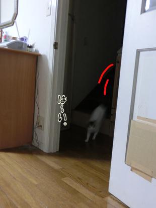 2012_05250119.jpg