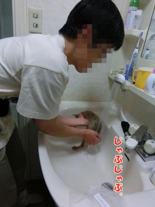 2012_05270016.jpg