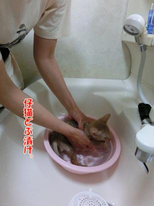 2012_05270043.jpg