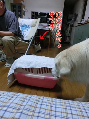 2012_05280104.jpg