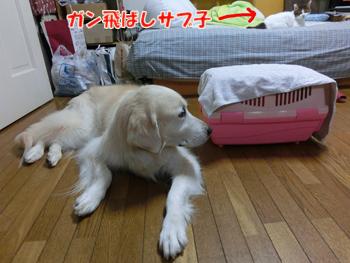 2012_05280115.jpg