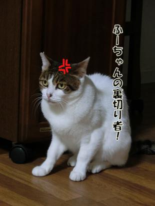 2012_05300024.jpg