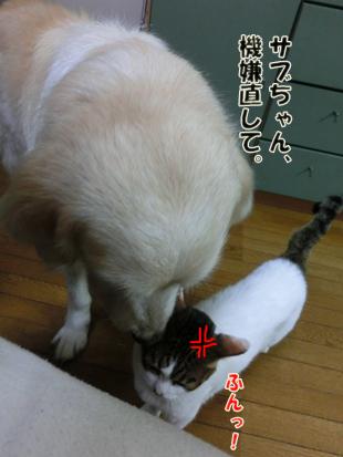 2012_05300038.jpg