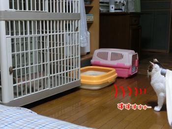 2012_05310053.jpg