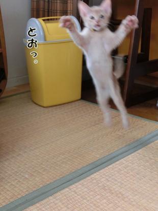 2012_06030146.jpg