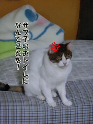 2012_06100268.jpg