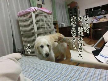 2012_06130137.jpg