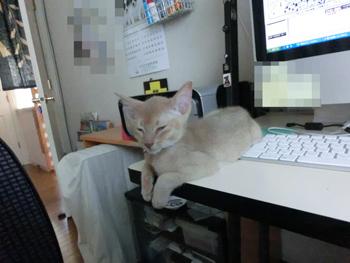 2012_06160029.jpg