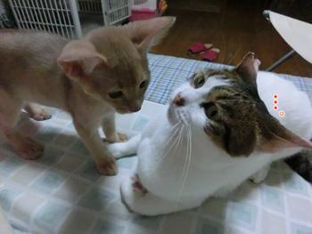 2012_06160074.jpg